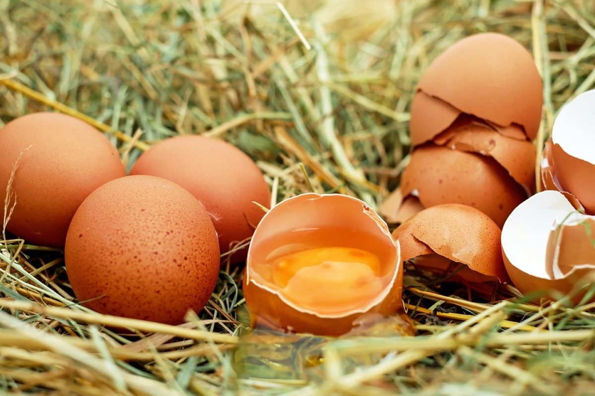 poultry meat, export, Singapore, AVA, egg